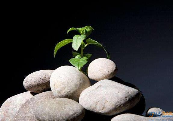 基金知识盘点-主动与被动型基金优势劣势解读 干「